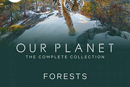 Our Planet - Forests