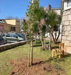 Zasadi stablo - ne budi panj 2021.